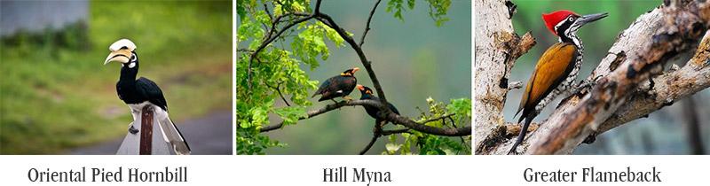 Wildlife- birds in Phu Quoc
